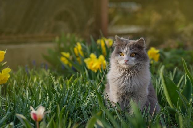 Young cat walks and enjoying a beautiful garden