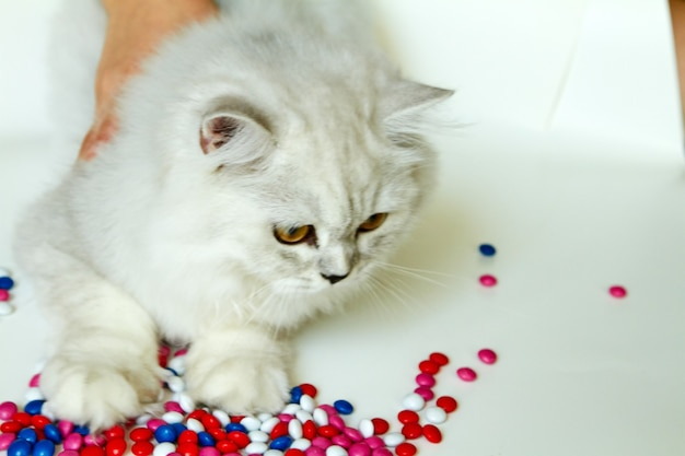 Young cat on a white background with sweets