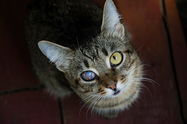 A young cat with one damaged eye looking at the camera.