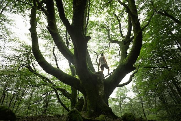 バスク地方artikutzaの霧の森を探索する若い白人男性
