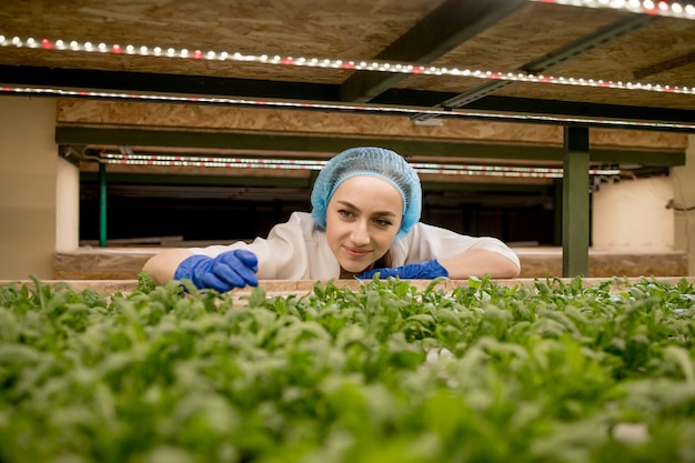 彼女の水耕栽培農場から緑のバジルを収穫している若い白人女性。有機野菜と健康食品を育てるというコンセプト。