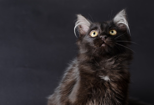 Young charming black cat