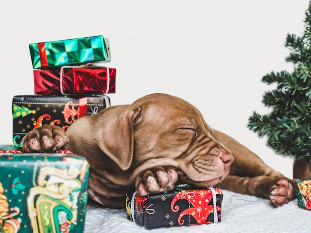 Young, charming puppy and a festive box