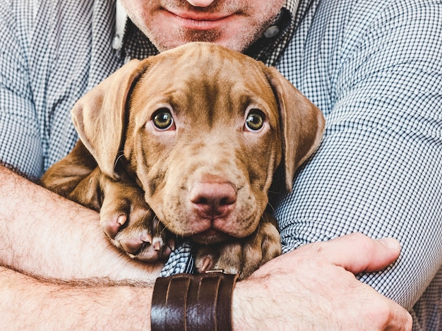 Young, charming puppy in the hands of a caring owner.