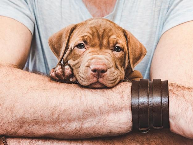 돌보는 주인의 손에 젊고 매력적인 강아지. 근접, 흰색 격리 된 배경입니다. 스튜디오 사진. 동물 돌보기, 교육, 훈련 및 사육의 개념