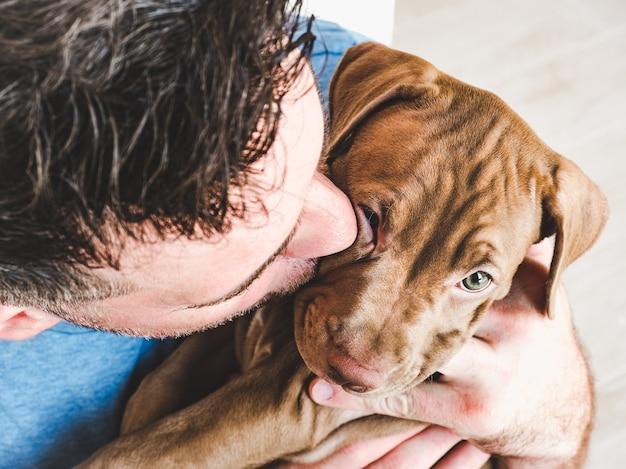 돌보는 주인의 손에 젊고 매력적인 강아지. 프리미엄 사진