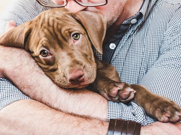 돌보는 주인의 손에 젊고 매력적인 강아지.