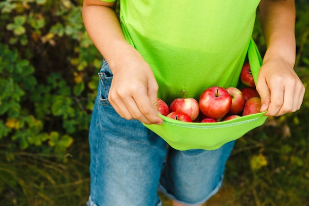 彼のtシャツに新鮮な有機ジューシーな赤いリンゴを保持している少年。屋外の緑豊かな庭で収穫