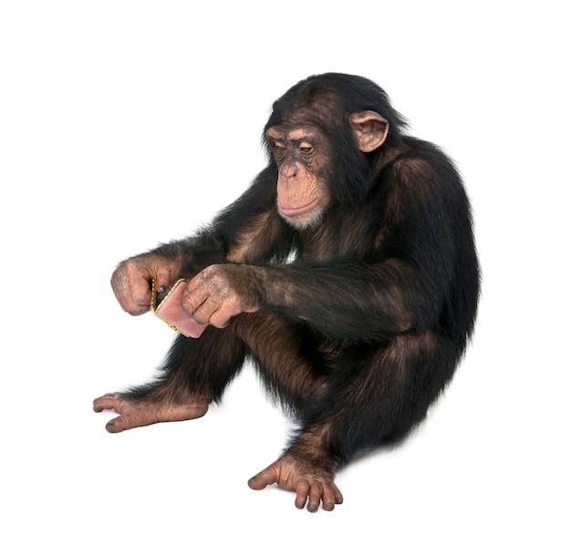 Молодой шимпанзе смотрит на себя в карманном зеркале на белом фоне