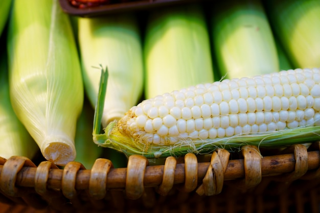 Young cobs of fresh white sweet corn from organic garden