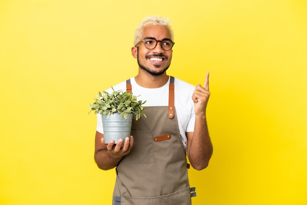 素晴らしいアイデアを指している黄色の背景に分離された植物を保持している若いコロンビア人
