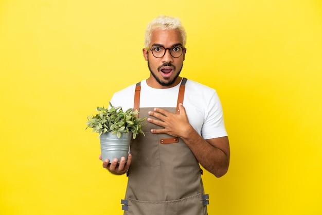 黄色の背景に分離された植物を保持している若いコロンビア人男性は、右を見ながら驚いてショックを受けました