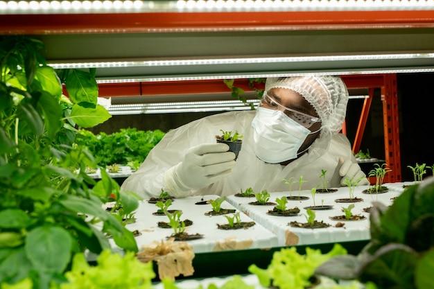 수직 농장에서 일하는 동안 작은 냄비에 있는 녹색 묘목을 바라보는 보호 작업복을 입은 젊은 현대 연구원 또는 농공학자