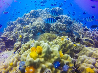 Young coral reef formation on sandy sea bottom