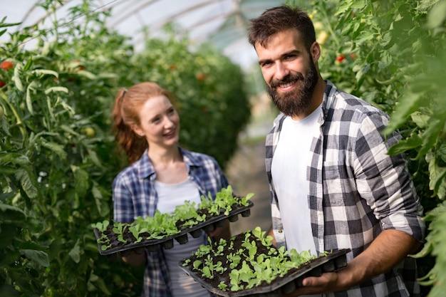 현대 온실에서 야채를 재배하는 젊은 부부