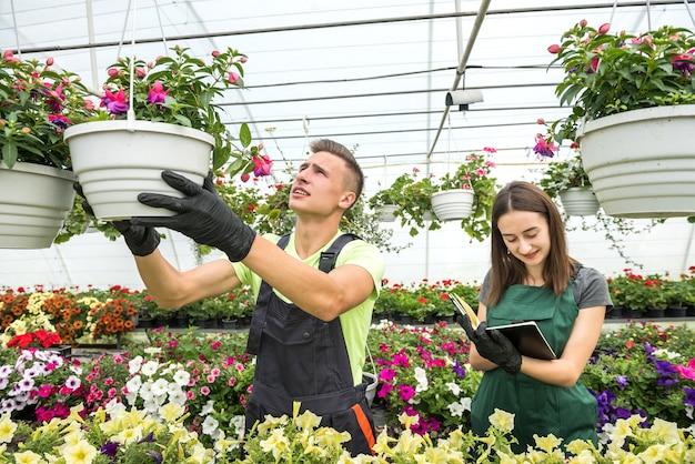 Молодая пара флористов, работающих с цветами и растениями в теплице. семейный бизнес