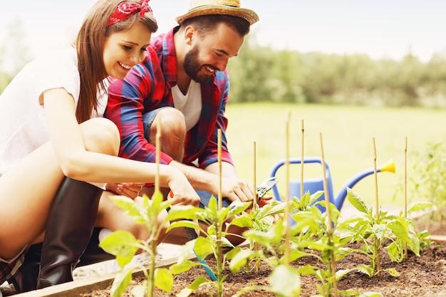 유기농 야채와 허브를 재배하는 젊은 부부