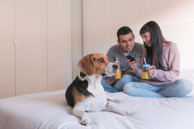 Young couple sitting on bed, using mobile phone and having fun. cute beagle dog besides. breakfast time. home, indoors
