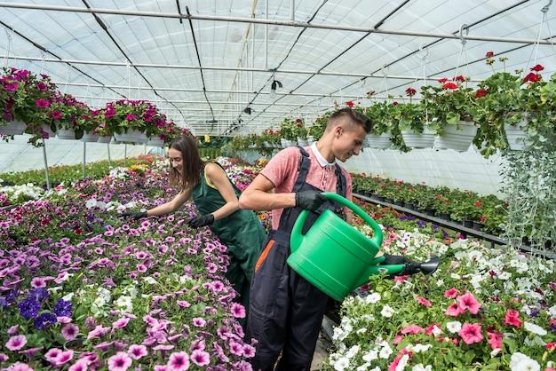 Молодая пара заботится о цветах каждый день, поливая их в промышленной теплице на продажу