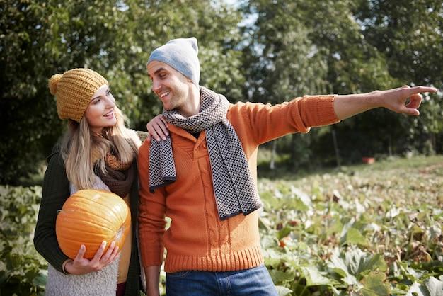 Молодая пара гуляет в поле со спелой тыквой