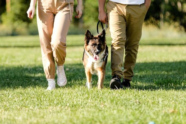 공원에서 그들의 개 보더 콜리와 함께 산책하는 젊은 부부.