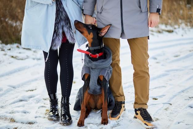 屋外の犬ドーベルマンと若いカップル