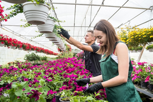 Young couple working together take care of colour flowers in large greenhouse