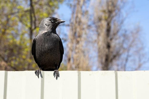 Молодая ворона сидит на металлическом заборе в городской среде