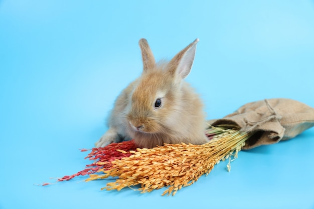 Young cute brown easter bunny rabbit with colorful grass