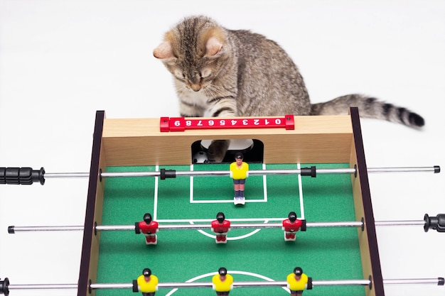 A young cute cat tabby plays with a soccer ball near a table football. the little kitten is the judge in the game isolated on a white wall
