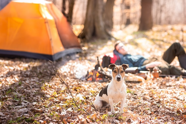 Young cute dog is resting in the woods near the bonfire.
