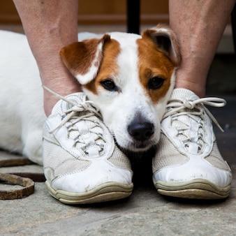 Молодая, милая собака ищет защиты через ноги