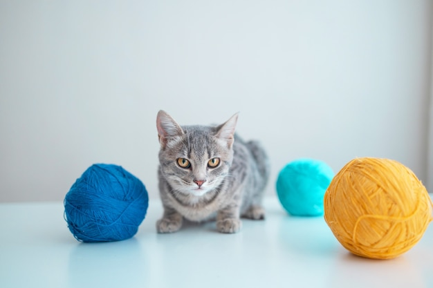 회색 벽 배경에 있는 흰색 테이블에 주황색과 파란색 실을 엮은 젊고 귀여운 고양이
