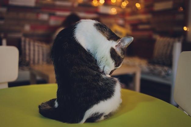 若いかわいい生姜猫は片付けのために自分自身をなめます。