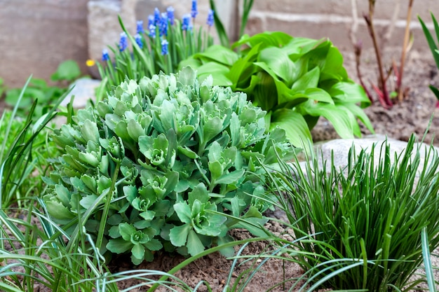 Young decorative plants on flower bed