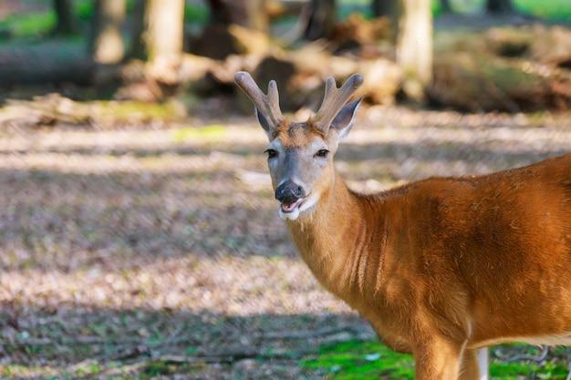 Молодой олень позирует в лесу