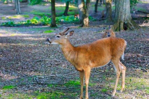 Молодые олени в лесу