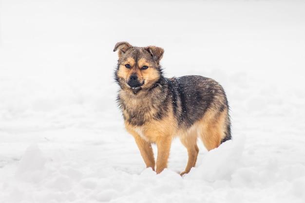 Молодая собака зимой на белом снегу