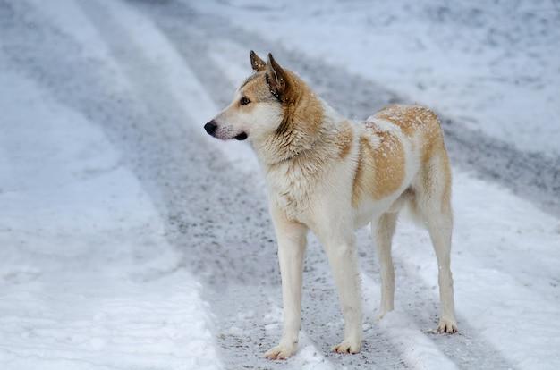 정원에서 겨울 날에 젊은 개. 눈 속에서 노는 잡종 개. 겨울에 야외에서 강아지의 초상화입니다.
