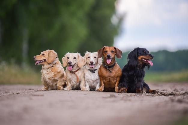 Позируют молодые собаки. симпатичные собачки или домашние животные выглядят счастливыми на фоне природы.