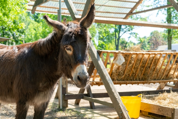 Young donkey on a farm on a summer day. cute pet.