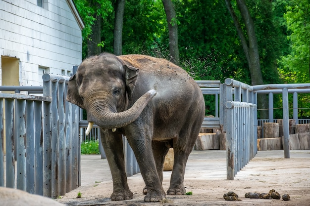 Young elephant is having fun on the playground and splashing water