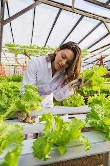 若いエンジニアは、水耕栽培の庭でレタスの品質を観察し、手を使ってチェックしています-水耕栽培の庭で働いている美しい若い白人農家。