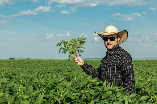 Young farmer in hat holding soybeans  in soybean field.