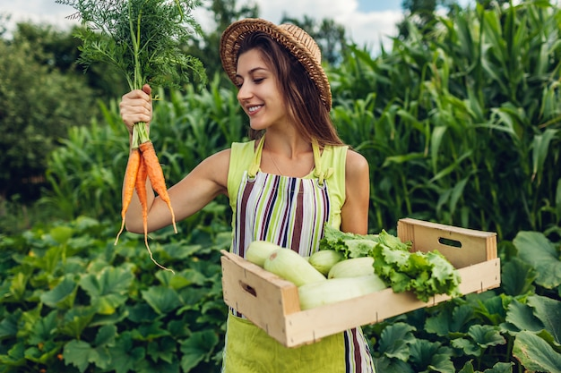 Young farmer holding carrots and wooden box filled with fresh vegetables, woman gathered summer crop,