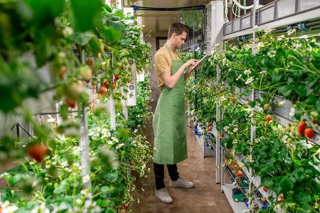 成長しているイチゴのディスプレイを見ている緑のエプロンの若い農夫