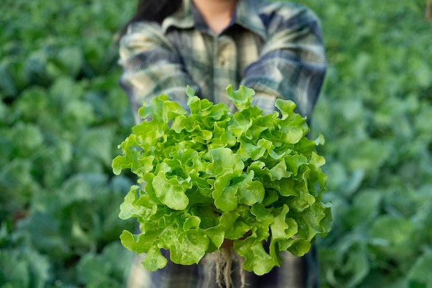 Young farmer is holding vegetable green oak