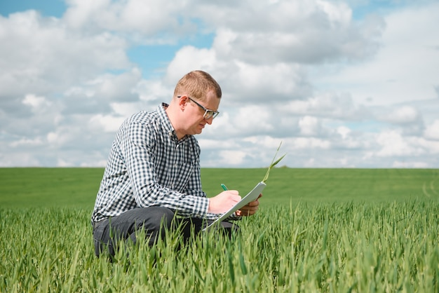 Young farmer on a wheat field. young wheat in spring. agriculture concept. an agronomist examines the process of ripening wheat in the field