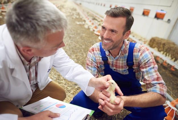 動物の健康をチェックする医者と若い農夫