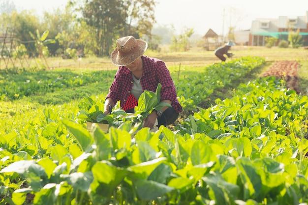 木箱に有機野菜を入れた若い農夫彼は顧客に新鮮な野菜を届けようとしています。